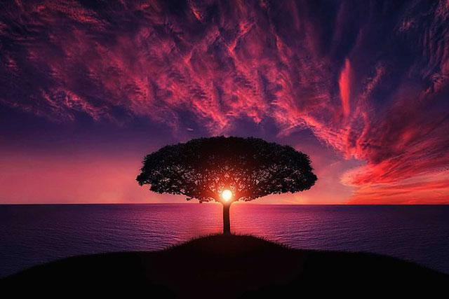 tree-736885_640